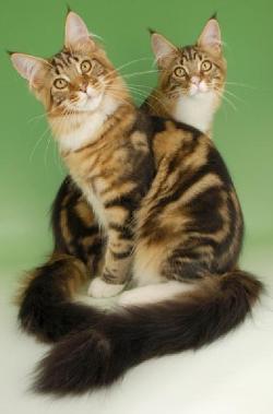 Кошка - священное животное. Значение и влияние кошек