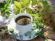Травы как средство снижения веса: миф или реальность?