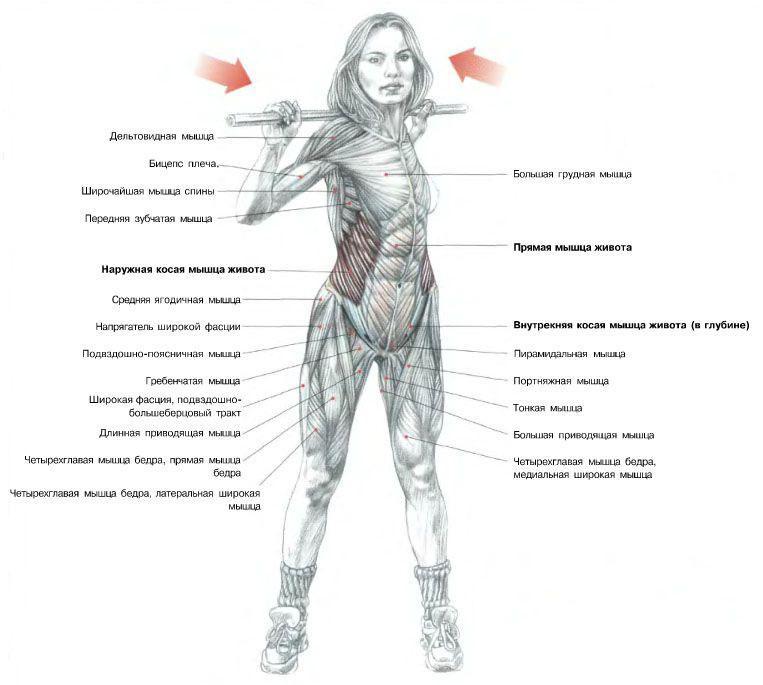 как накачать боковые мышцы пресса, фото