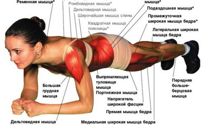 Группы мышц, задействованные при выполнении упражнения