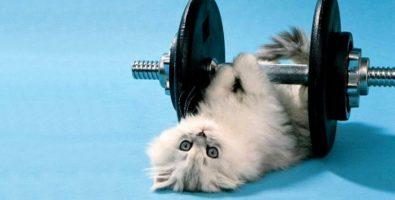 Эффективные способы быстрого похудения для ленивых