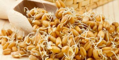 Пророщенная пшеница для похудения — в борьбе за стройность и здоровье!
