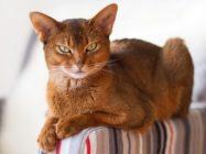 Кошка — священное животное. Великое предназначение вашего пушистого любимца
