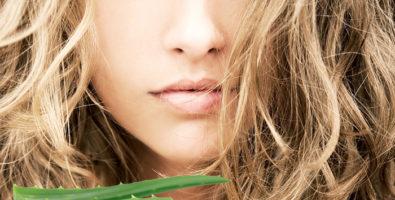 Алоэ от перхоти — 14 рецептов домашних масок