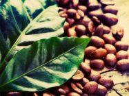 Маски с кофейной гущей для лица – техника приготовления и полезные рекомендации по применению